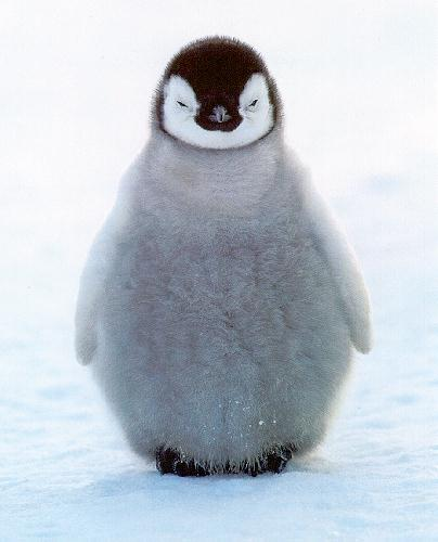 black metal penguin